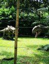 Dinosaur 03